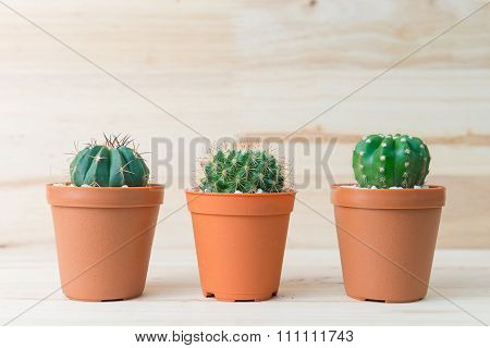 Cactus collection in pot on woody background. interior decoration.
