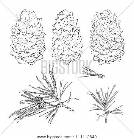 Set From Fir Tree Branches And Fir Cones