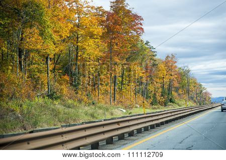 Colorful Trees Along Highway