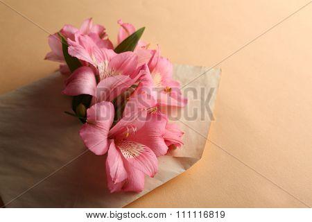 Pink alstroemeria in envelope on beige background