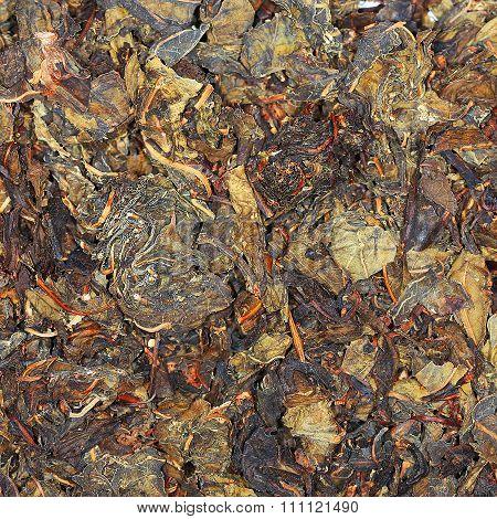 Cyprus angustifolia (Epilobium)