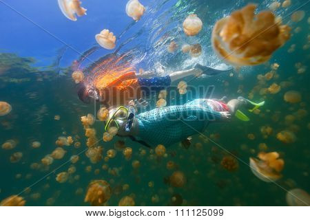 Underwater photo of family snorkeling with endemic golden jellyfish in lake at Palau. Snorkeling in Jellyfish Lake is a popular activity for tourists to Palau.