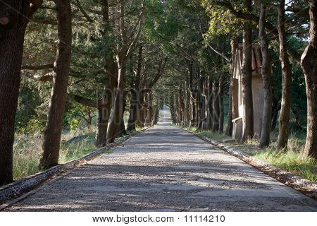 Path Lined With Trees