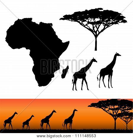 Africa And Safari Elements