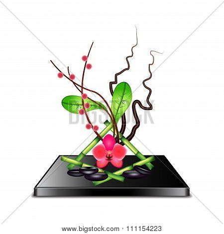 Ikebana Isolated On White Vector