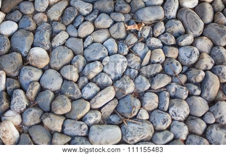 Pavement Pebbles