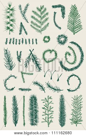 Hand drawn set green fine branch vector isolated