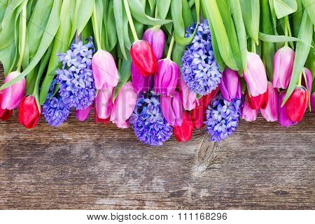 blue hyacinth and  tulips