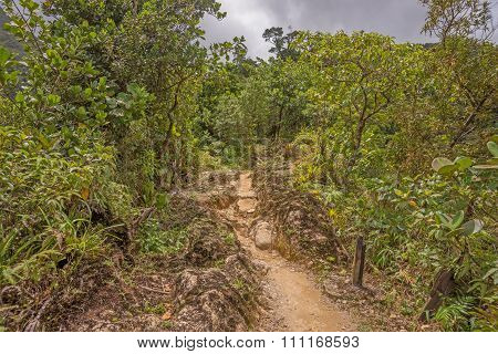 Hike in the rainforest of Dominica