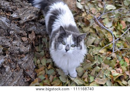 Grey And White Fluffy Cat In Autumn Leaves
