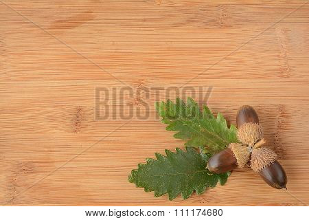 Acorn And Leaves