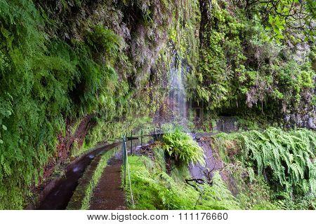 Trail At Levada Do Rei Through An Ancient Laurel Forest