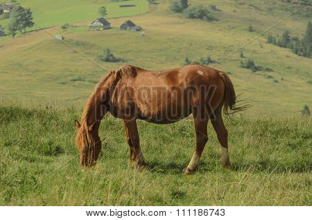Horse at mountains