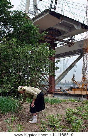 elderly woman farmer inspects plants planted in field, over bridge