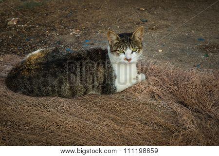 Fisherman Cat. Essaouira, Morocco.