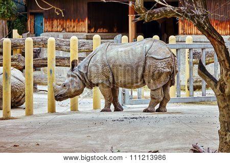 Rhino / Rhinoceros Grazing On Nature Landscape.
