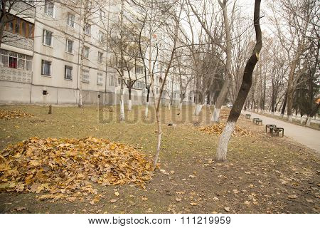Heap of autumn leaves