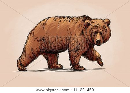 color brush painting ink draw isolated grizzly bear