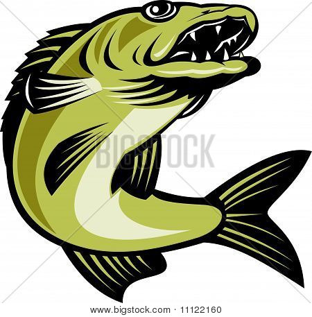 walleye fish jumping