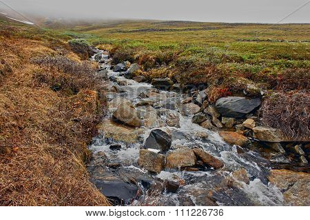 Spring In The   Tundra. Creek Meltwater.