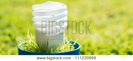 Energy Saving Light Bulb. Green Energy Concept