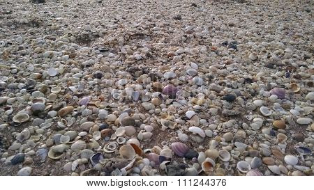 Cementerio de moluscos