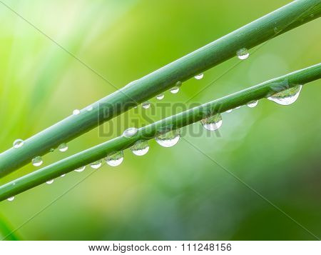 Dew Drops On Grass In The Morning