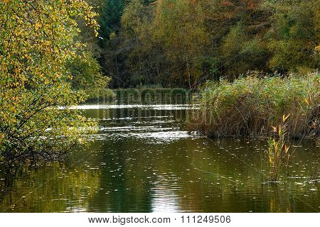 Sunny Day On A Calm Pond Lake In Summer