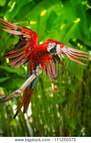 Red-and-green macaw sitting on branch over blue sky