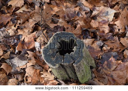 a hollowed out tree stump surrounded by leaves