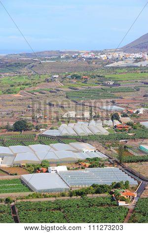 Farms In Tenerife