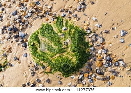 Seaweed On Sand In Cote D'opale, France