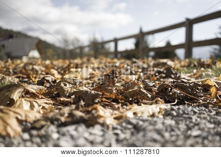 Brown Autumn Leaves On A Gravel Path