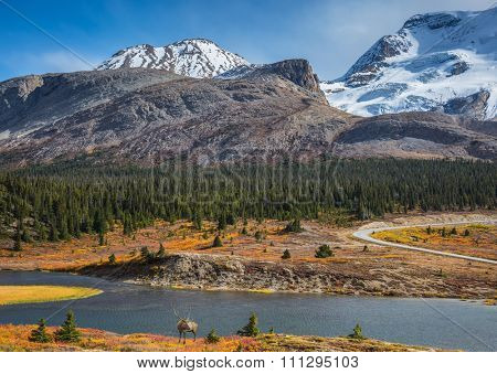The magnificent Rocky Mountains in Canada. Lake from the melting of huge glaciers. Beautiful deer antlered