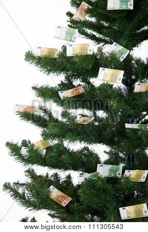 Close up of money ornaments on christmas tree. Isolated on white, euro, finances, presents, business.