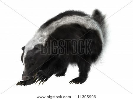 Striped Skunk On White
