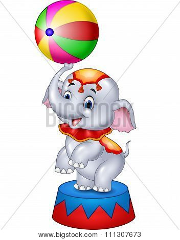 Cute Circus elephant with a striped ball stands on a podium