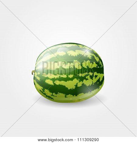 Illustration of watermelon