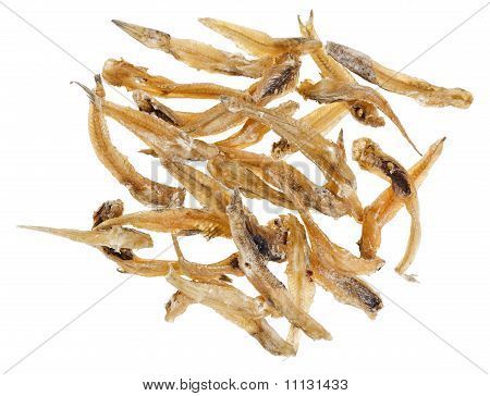 Many Salted Goby Fishes Isolated  On White Background