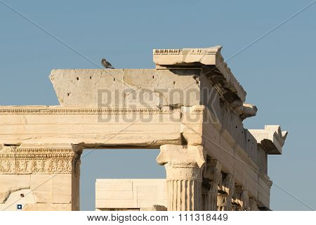 Pigeon sitting on top of Acropolis in Greece.