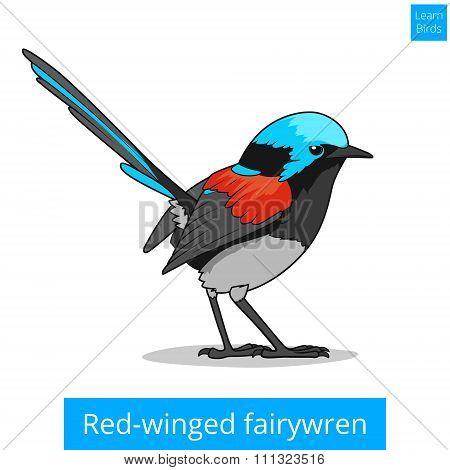 Red winged fairywren bird educational game vector