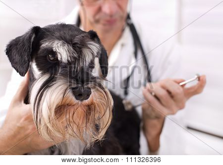 Veterinarian Applying Injection To A Dog
