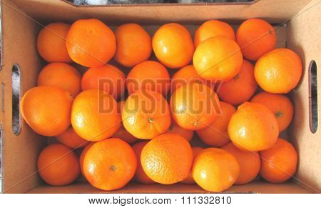 satsuma orange box background