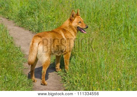 Cute cross-breed dog in spring grass