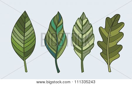 Leaf nature vector