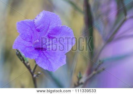 Selective Focus Of   Purple Flower  In The Garden