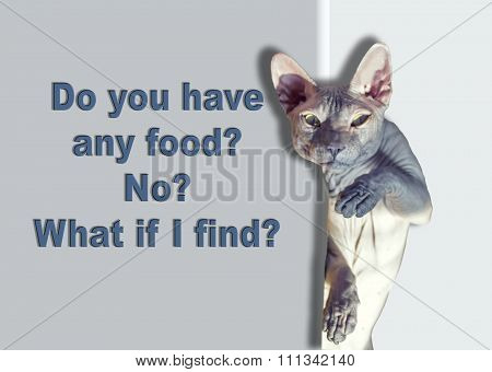 Funny and bald Sphynx cat, food requests.