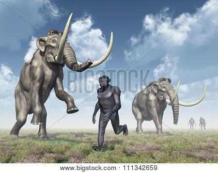 Homo Habilis and Mammoths