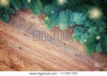 christmas fresh evergreen tree branches
