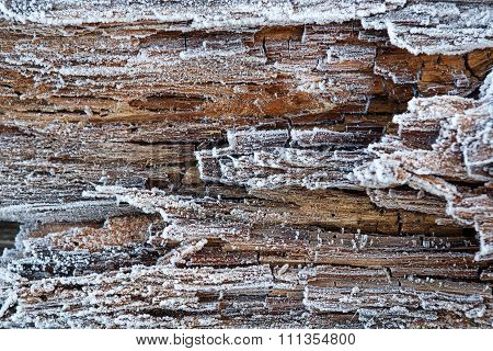 Rime On Rotten Wood